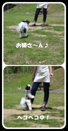 20110709reo.jpg