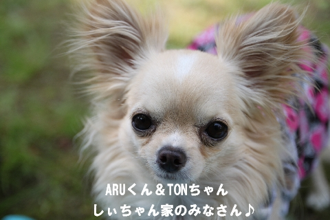 IMG_9688.jpg
