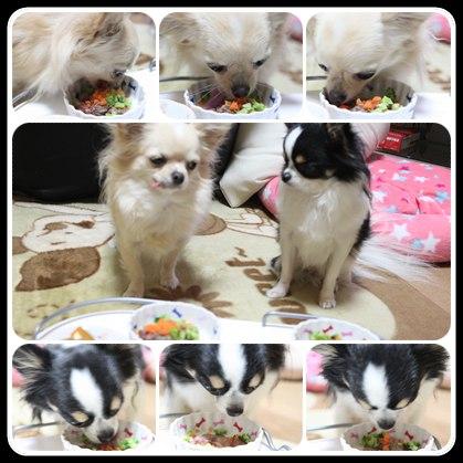 cats_20101221183235.jpg