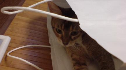紙袋 (2)