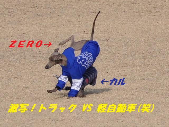 10-1-31 足柄イタグレ 546 (2)