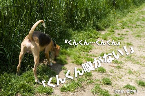 _NKS7146.jpg