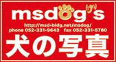 iconmsdogL.jpg
