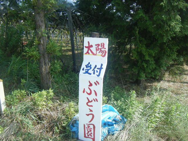 2009_0831ぶどう狩り0027
