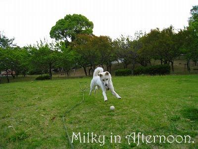 IMG_0007_20090503192731.jpg
