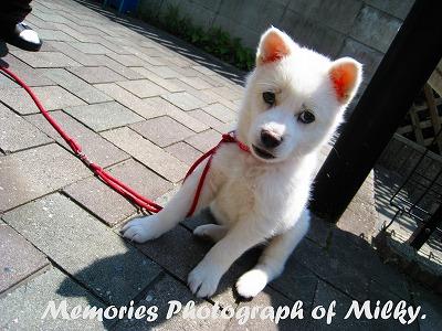 MPMilky0425.jpg