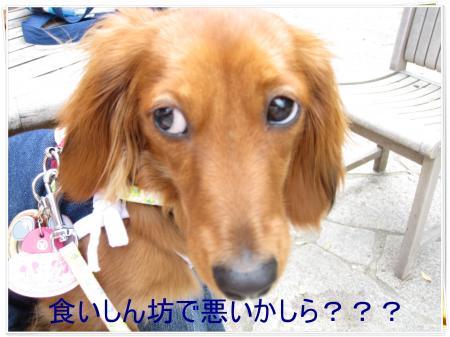 IMG_0674_convert_20090530151559.jpg
