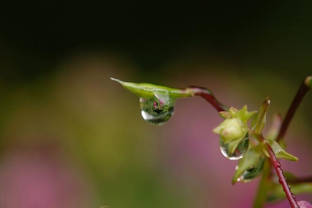 ツリフネ草4