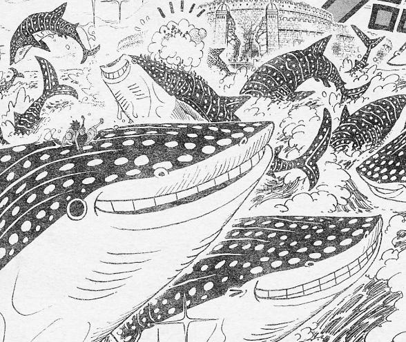 ジンベエザメの群れ