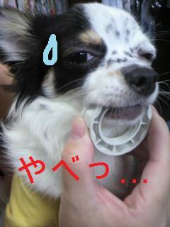 1_20091030220249.jpg