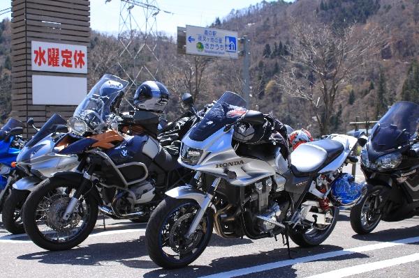 gifusakura10.jpg