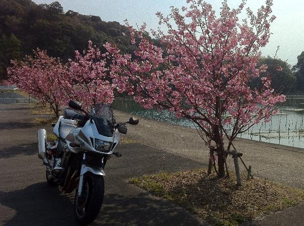morisupa32.jpg