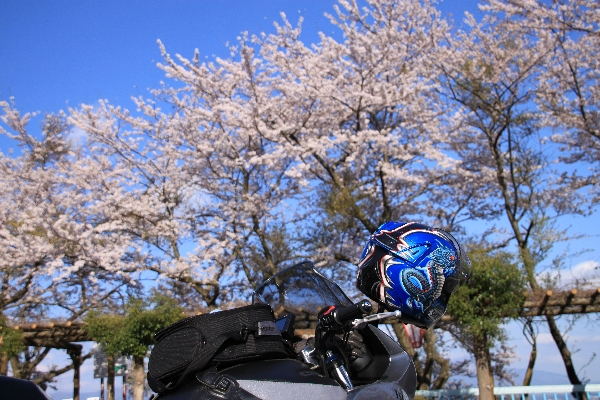 mrf-biwako19.jpg