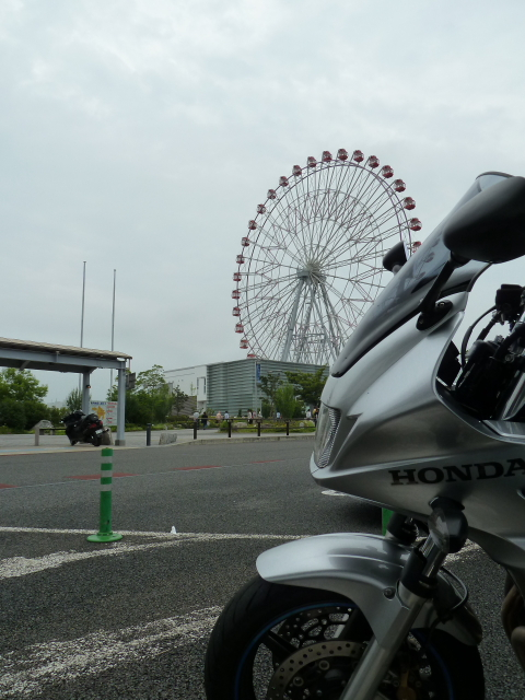 sakuraebiebi37TT.jpg