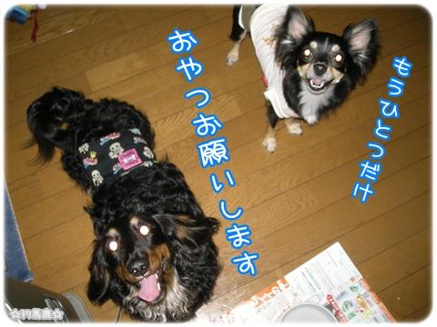 レオン桜牙5