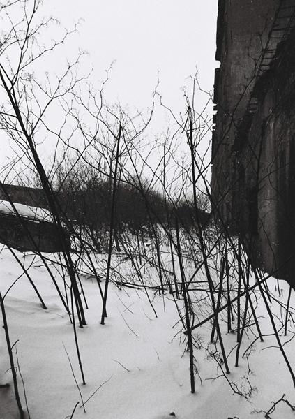 sirokuma2009_3.jpg