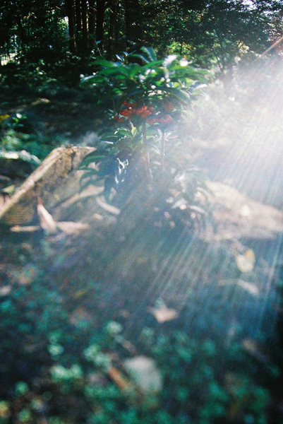 zen2009_2.jpg