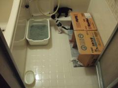 浴室の洗い場でいっしょに住みます。