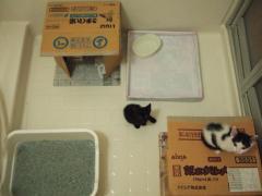 0809060021 おはようチャコマー@浴室の寝室。