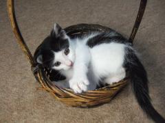富士額、きれいなシッポ。美猫になってね。