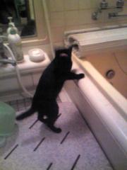 浴室で遊ぶチャコ。