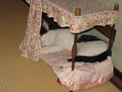 天蓋つきの豪華ベッド。気持ちよくて爆睡ミータ。