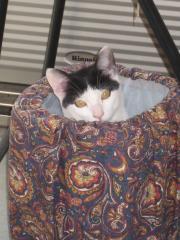 猫って好きなんだよね、こんな場所。よかったね、ミータ。