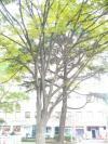 036_convert_20081016225308.jpg