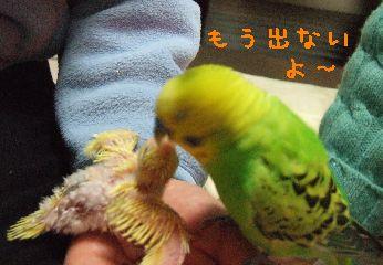 2006_0226_0228.jpg