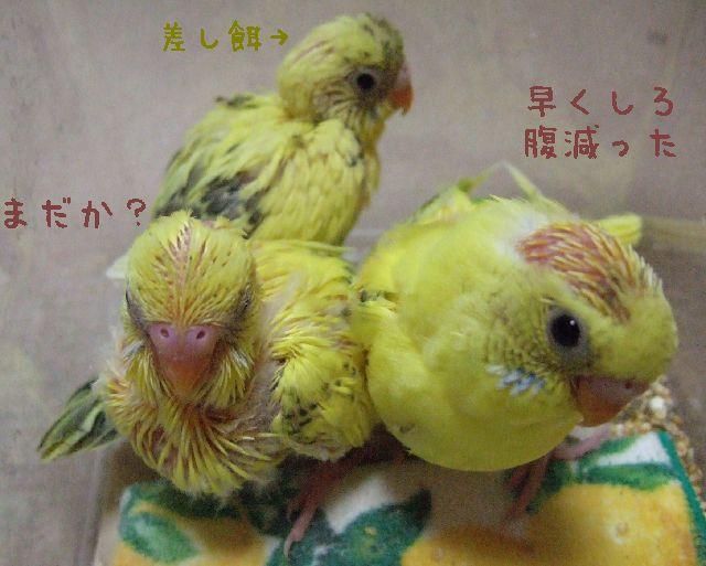 2006_0303_0512tl640.jpg