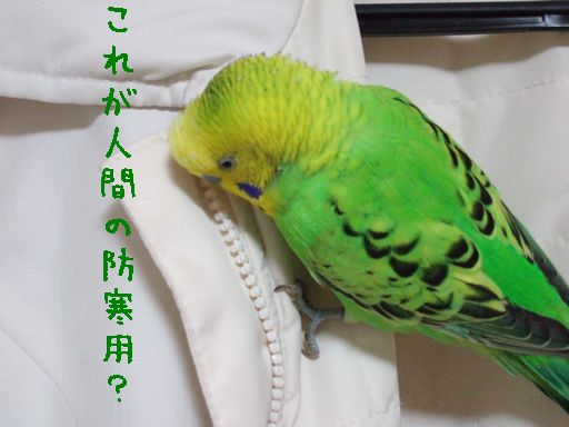 2006_1120_0089.jpg