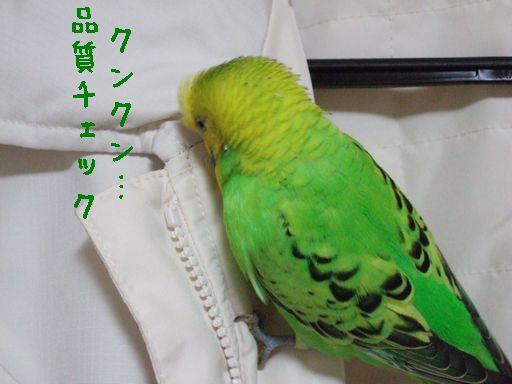2006_1120_0090.jpg