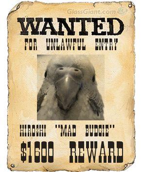 wantedposter3.jpg