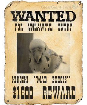 wantedposter4.jpg