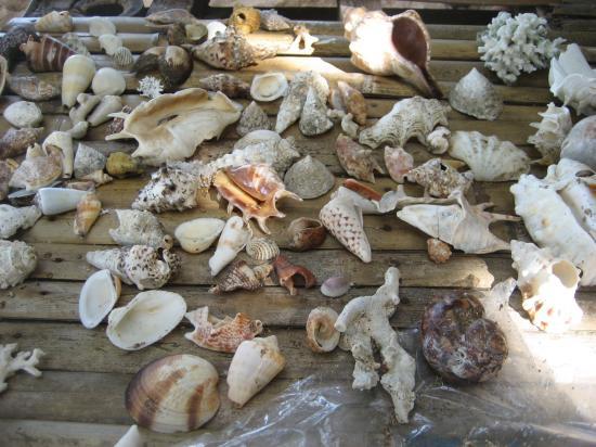 サンミゲル島 貝殻