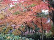 2006年湯布院紅葉