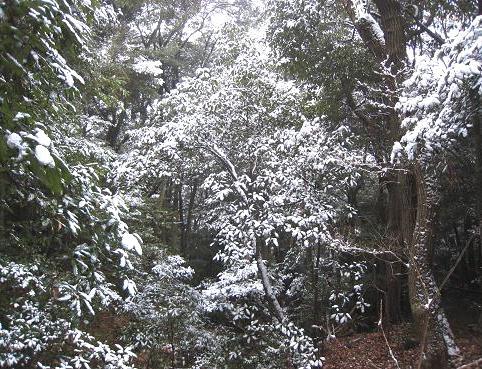 雪の金華山 019