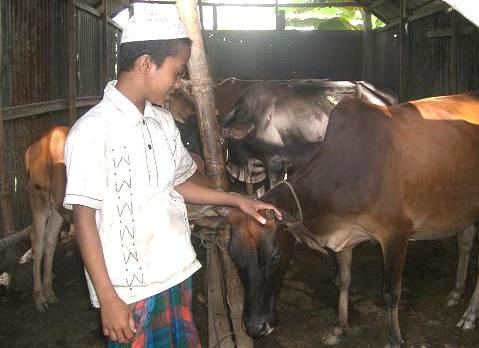 牛の世話 87