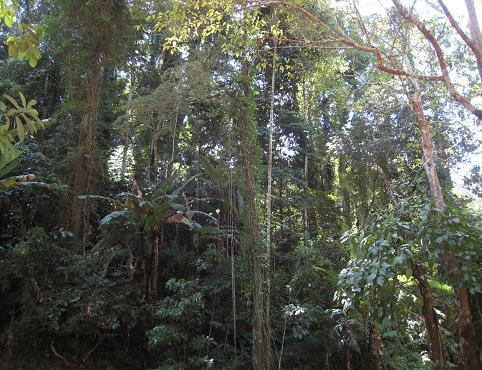 熱帯林 197