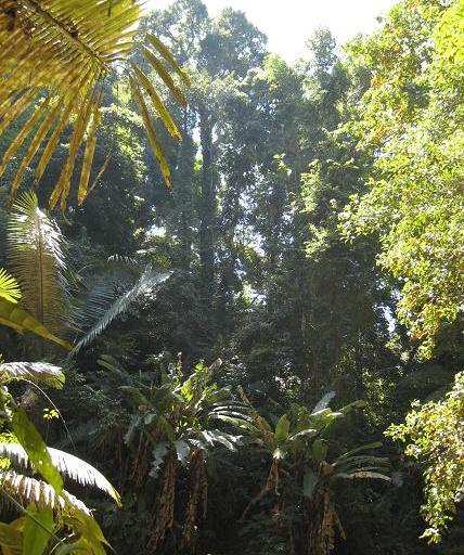 熱帯林 193