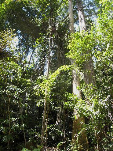 熱帯林 198