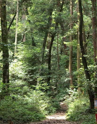 檜の自然林 064