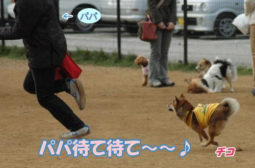 chiko.jpg