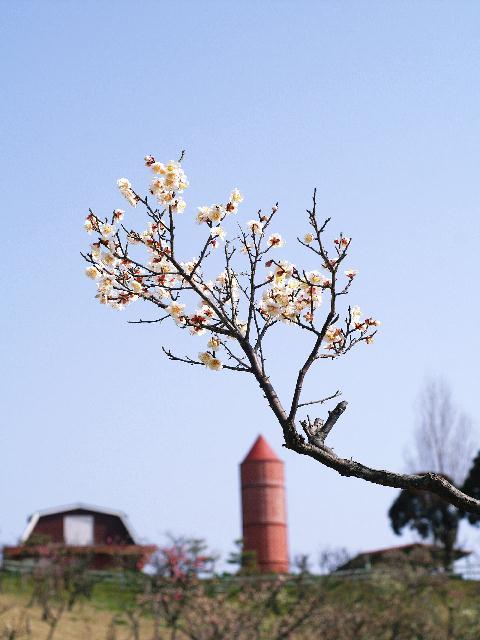 2009年02月14日_PICT0043