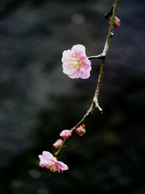 2009年02月25日_PICT0098