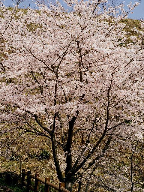 2009年04月09日_PICT0098