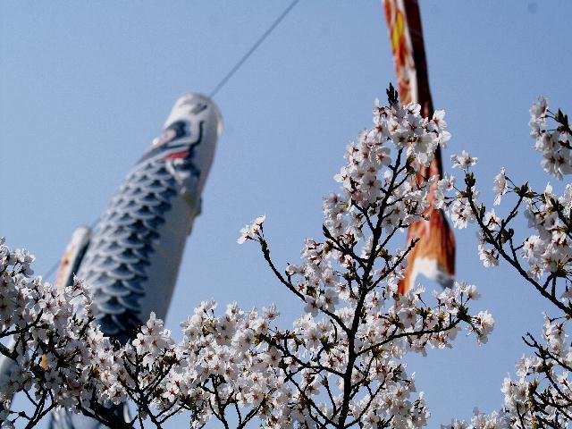 2009年04月09日_PICT0323