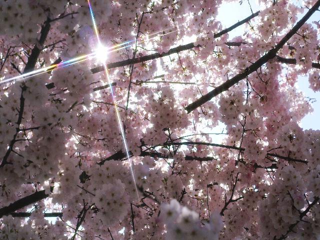 2009年04月09日_PICT0048