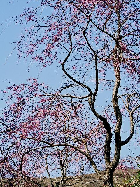 2009年04月09日_PICT0012