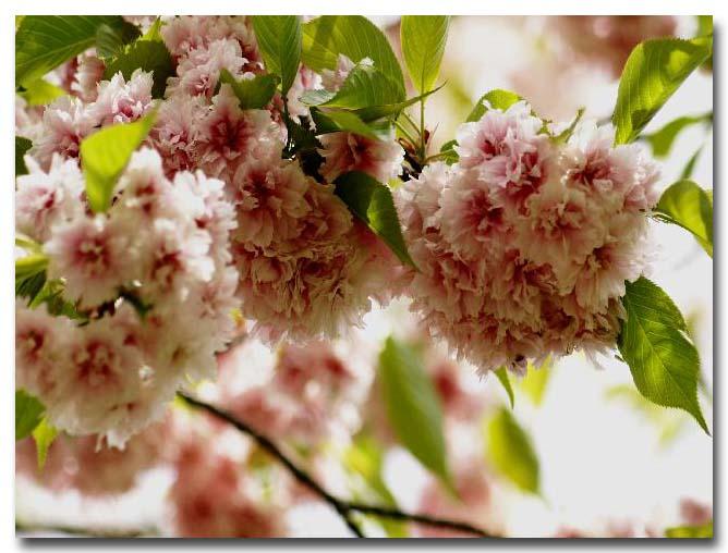 2009年04月22日_PICT0015 1